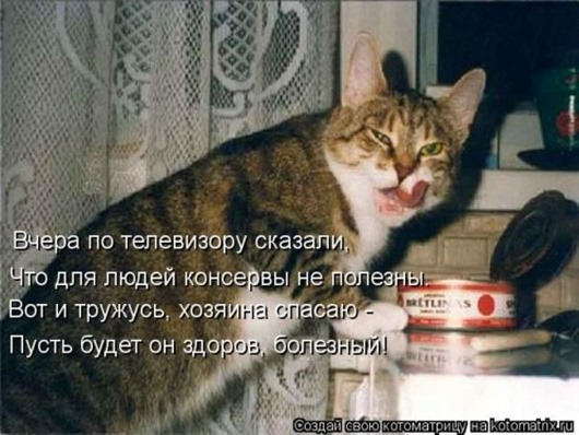 1481911572_kotomatrica-32