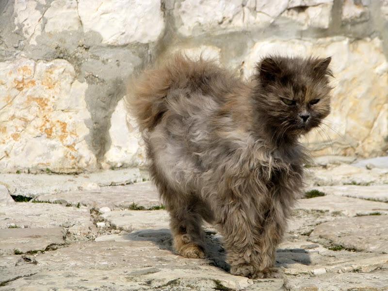IMG_9253 - Pussy cat!