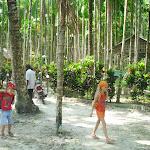 Андаманская пальмовая роща.jpg