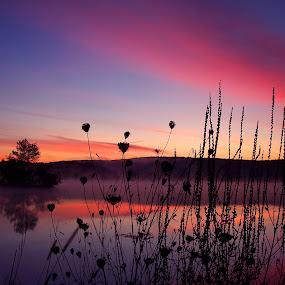 by April Barci - Landscapes Waterscapes ( water, reflection, nature, lake, beauty, sunrise, landscape )