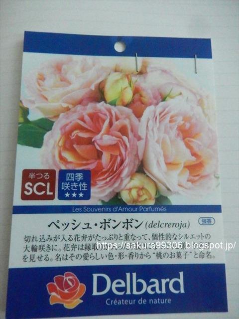 DSCN5620_R