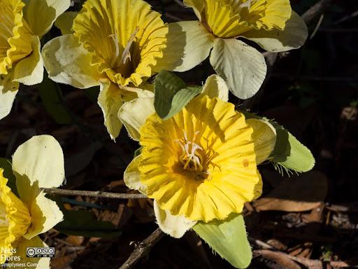 FloresSigma60mmF80-1220093