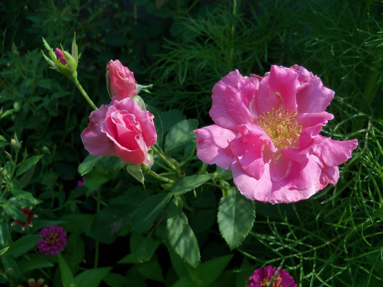 Gardening 2010, Part Two - 101_3285.JPG