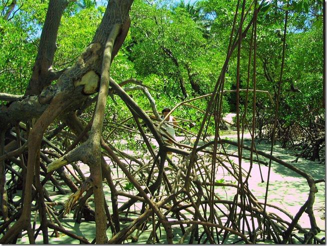 boipeba-manguezal