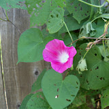 Gardening 2011 - 100_9955.JPG