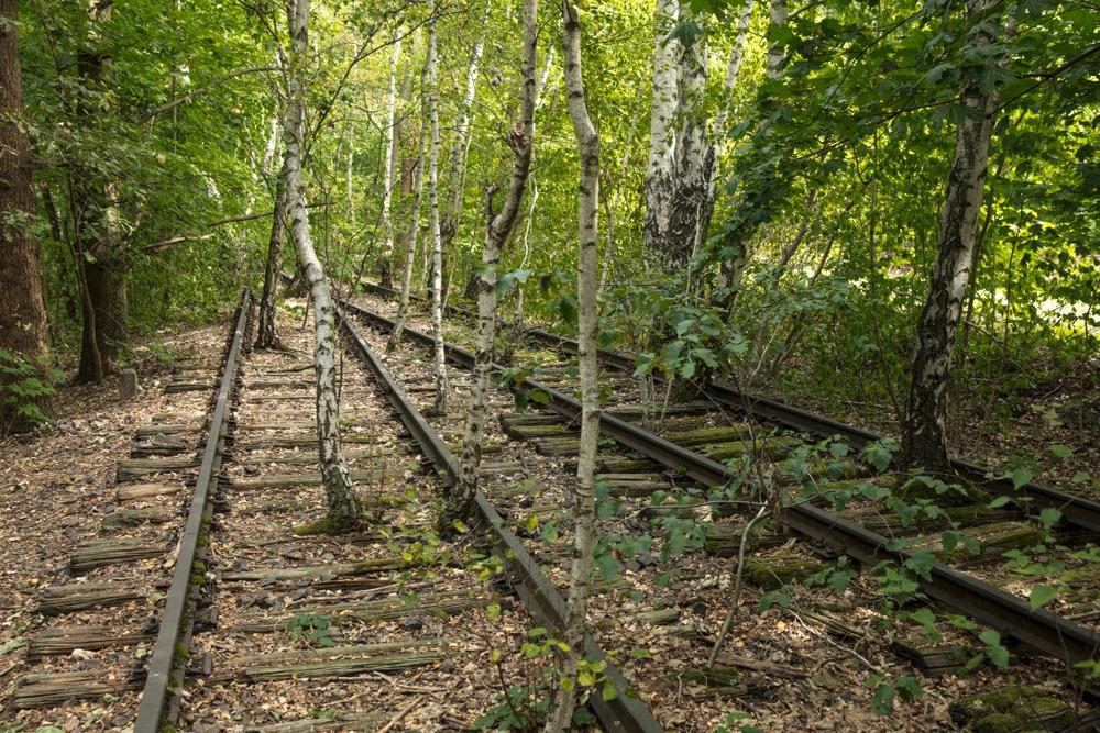 nature-park-sudgelande-66?imgmax=1600 A Nature Park in an Abandoned Railway Yard in Berlin Random