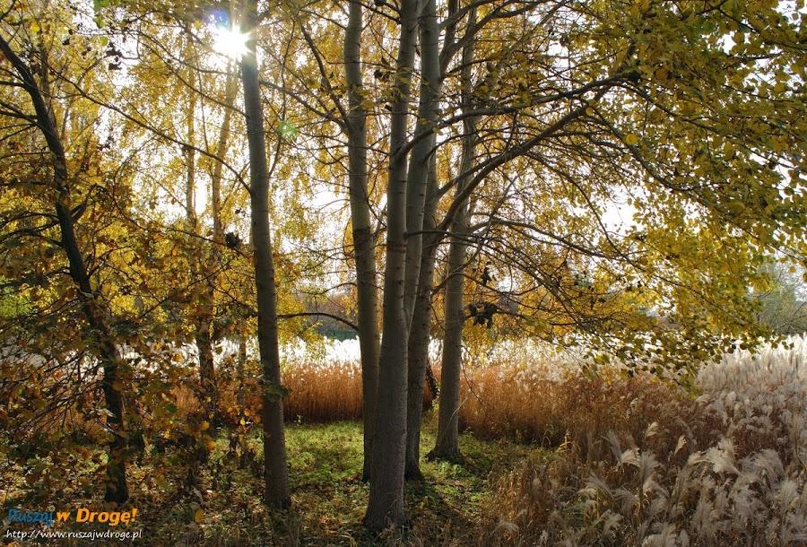 Park Reagana w Gdańsku - jesienne klimaty