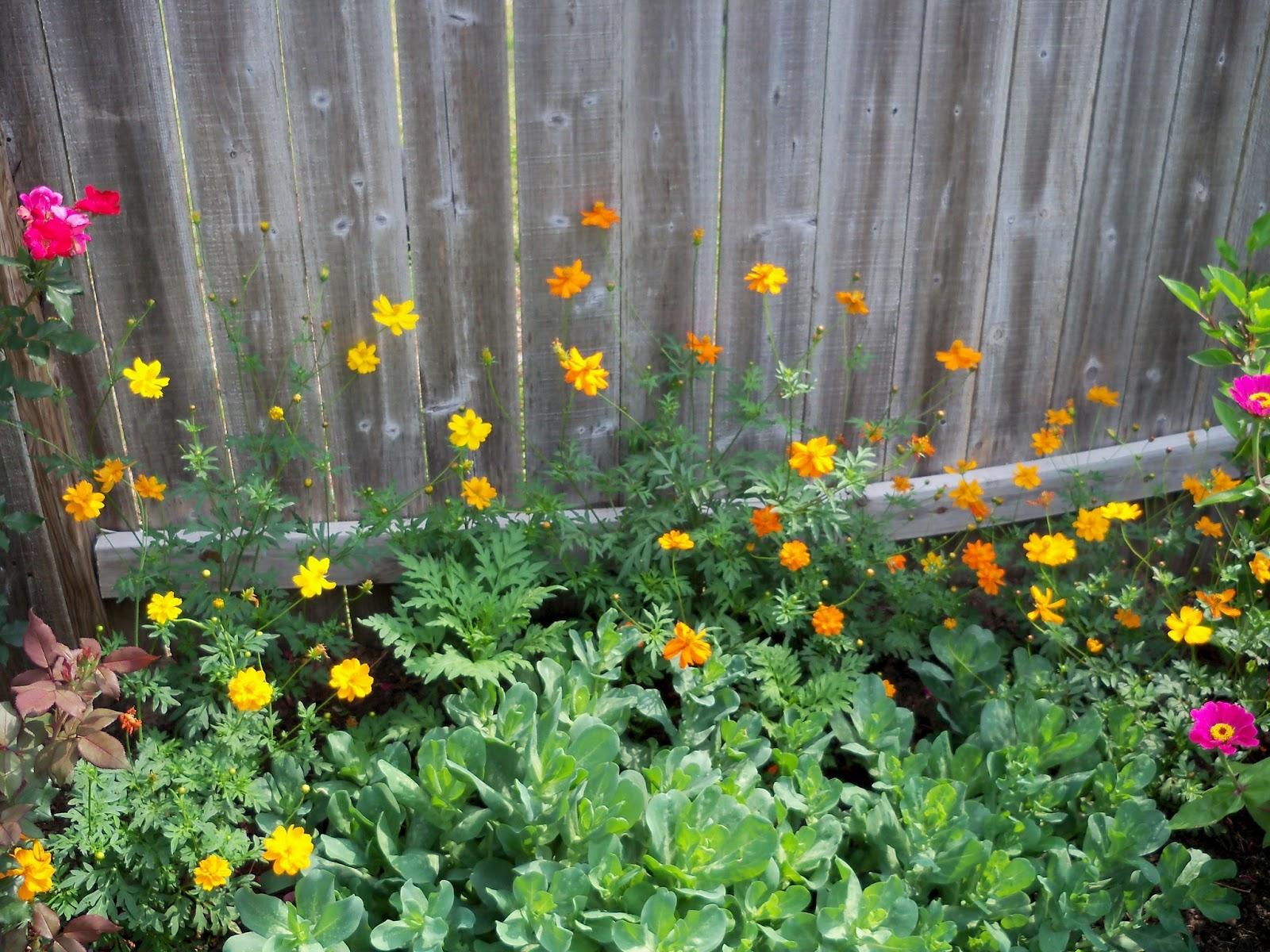 Gardening 2011 - 100_8676.JPG