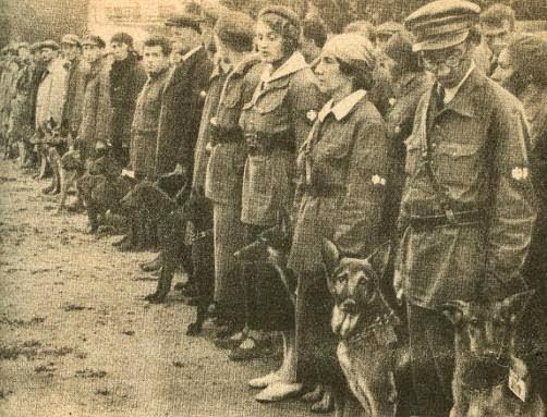 Cães sendo preparados para as batalhas