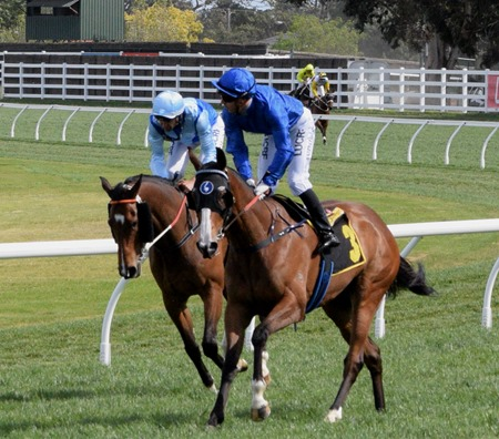 tristarc stakes_pearls_satya 1
