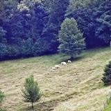 Gauthier in Slovenia - Vika-03864.jpg