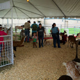 Fort Bend County Fair 2014 - 116_4319.JPG