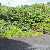 Hawaii Day 5 - 114_1586.JPG