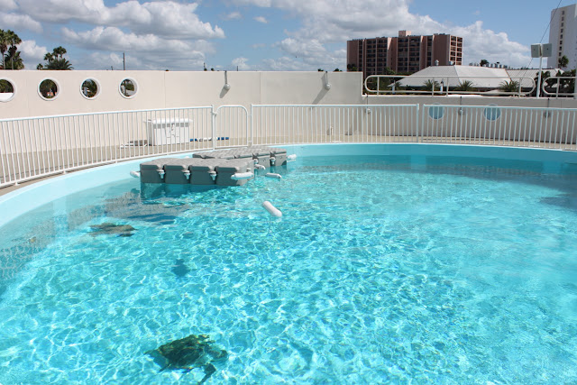 Visiting the Clearwater Marine Aquarium - This Is My South on