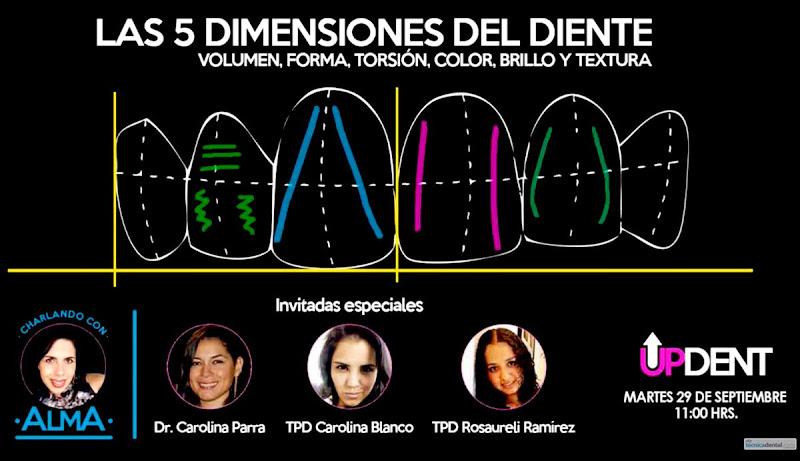 dimensiones-del-diente