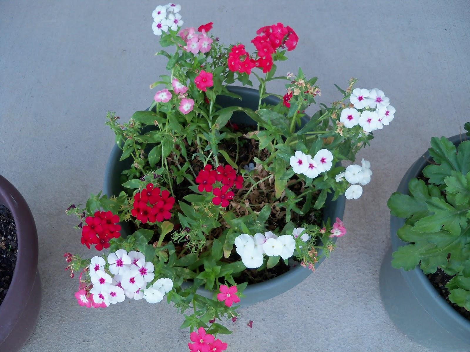 Gardening 2013 - 115_5454.JPG