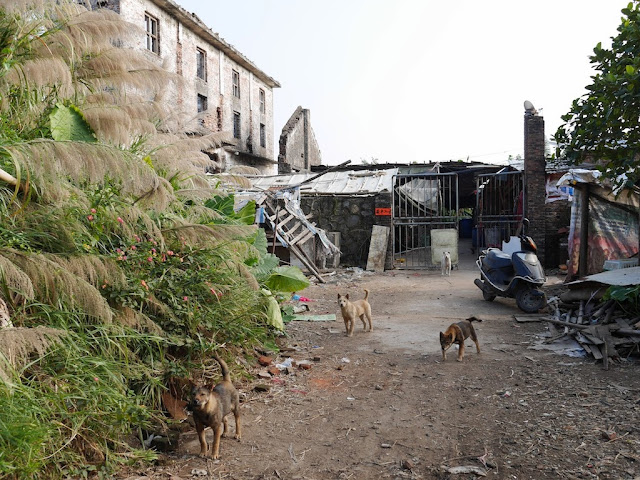 dogs in front of a partially dilapidated building south of Jiaoqiao New Road (滘桥新路) in Yangjiang
