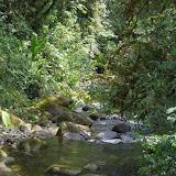 Rio Los Cedros, 1280 m. Montagnes de Toisan, Cordillère de La Plata (Imbabura, Équateur), 19 novembre 2013. Photo : J.-M. Gayman