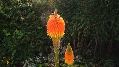Garden Flower 001