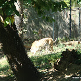 Pittsburgh Zoo Revisited - DSC05081.JPG