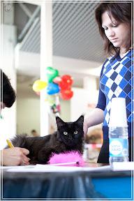 cats-show-24-03-2012-fife-spb-www.coonplanet.ru-027.jpg