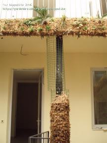 idée : végétalisation de pilier grâce à la sphaigne du chili et du grillage