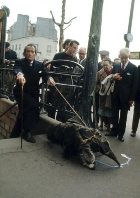 Salvador Dalí paseando un oso hormeguro por las calles de Madrid