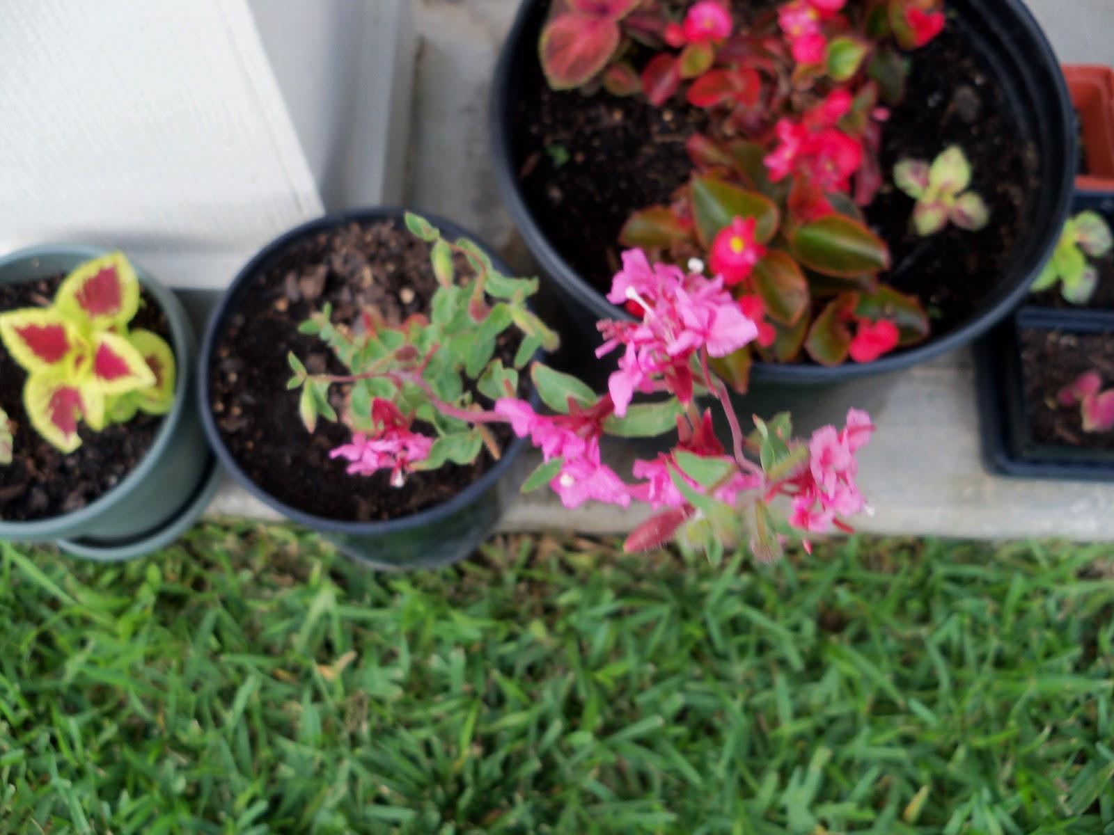 Gardening 2010, Part Two - 101_2778.JPG