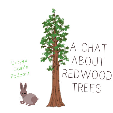 A Chat About Redwood Trees The Podcast