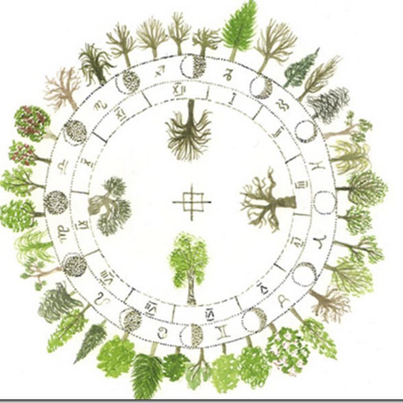 El horóscopo celta de los árboles