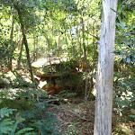 Ferns on the Casuarina Track (131971)