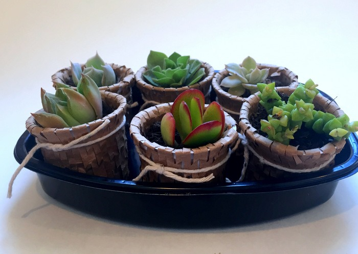 Recycled K Cup Succulent Pots - homework (10)
