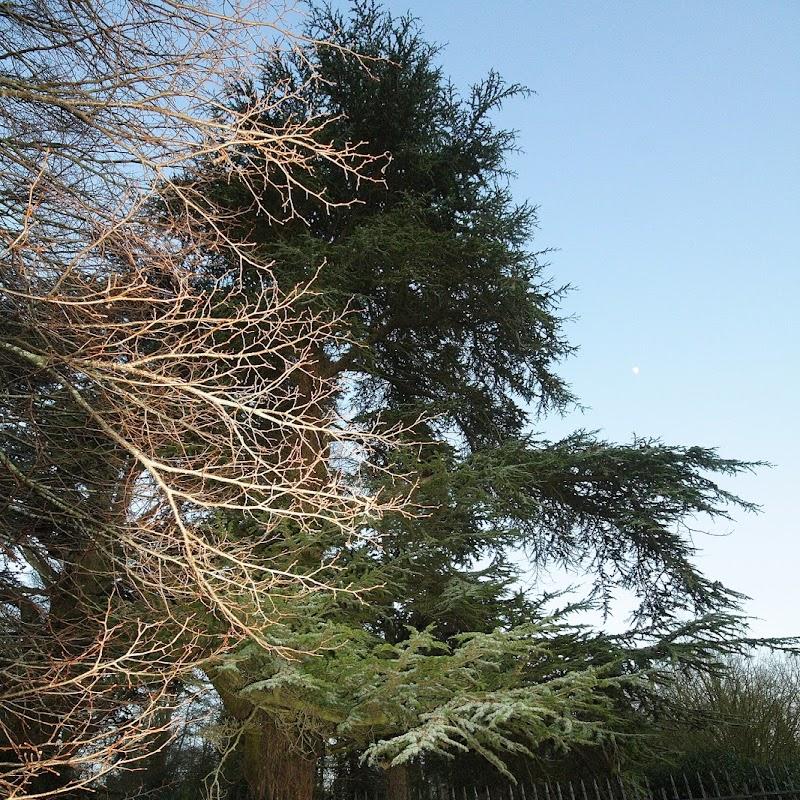 Stowe_Trees_31.JPG