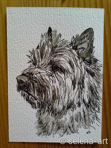 Inkt tekening Mungo.jpg