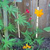 Gardening 2012 - 115_1532.JPG