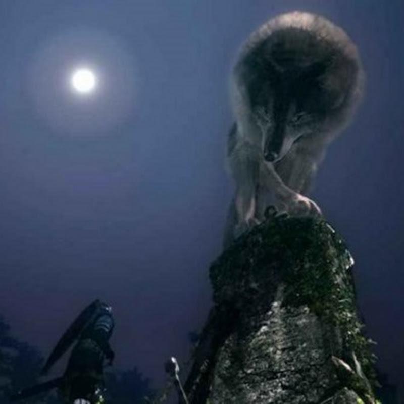 Dark Souls Remastered – Fundorte aller illusorischen Wände (Illusory Walls Secrets Guide)