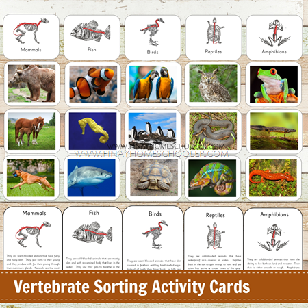 Vertebrate Animal Sorting Cards