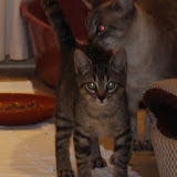 Sophie Kitten - Rehomed UK