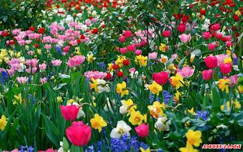 Top 12 hình hoa đẹp được tải nhiều nhất tuần qua