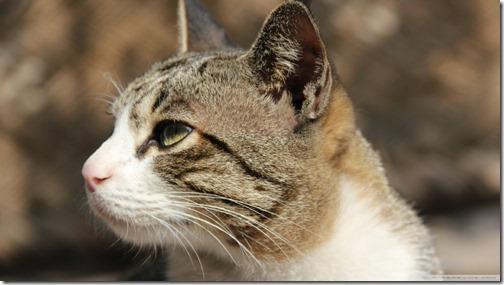 fotos de gatos (24)