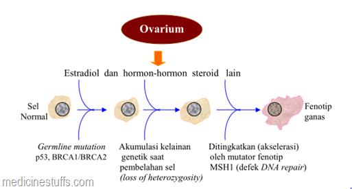 pengaruh-estradiol-dan-hormon-steroid-lain-pada-keganasan-sel-payudara