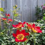Gardening 2011 - 100_8588.JPG