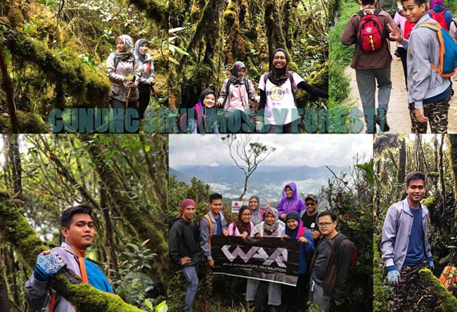 mendaki gunung siku mossy forest 2017