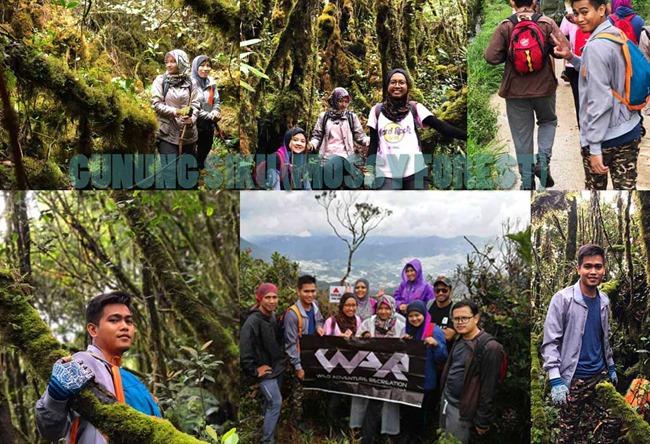 Pengalaman Mendaki Gunung Siku, Pahang (Mossy Forest)