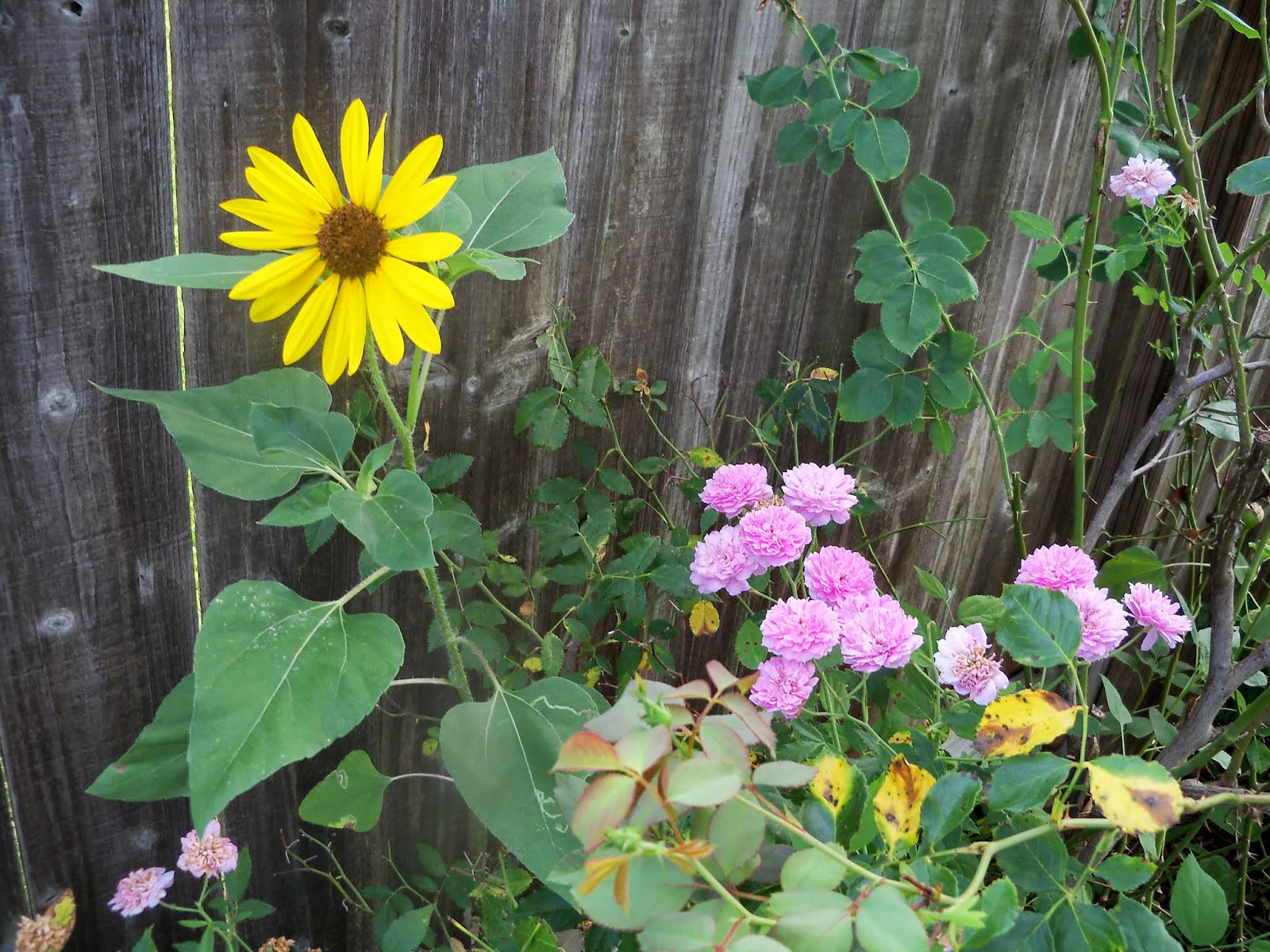 Gardening 2014 - 116_3411.JPG