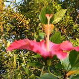 Gardening 2012 - IMG_2696.JPG