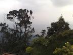 Vegetación andina