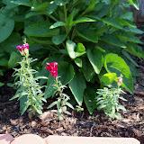 Gardening 2010, Part Two - 101_3332.JPG