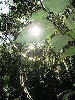 Santa Rosa Forest Preserve - Pucara