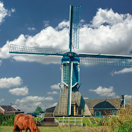 Blue Wip with a Red Horse by Pete Bobb - Buildings & Architecture Public & Historical ( dutch, horse, cumulus, windmill, wip )